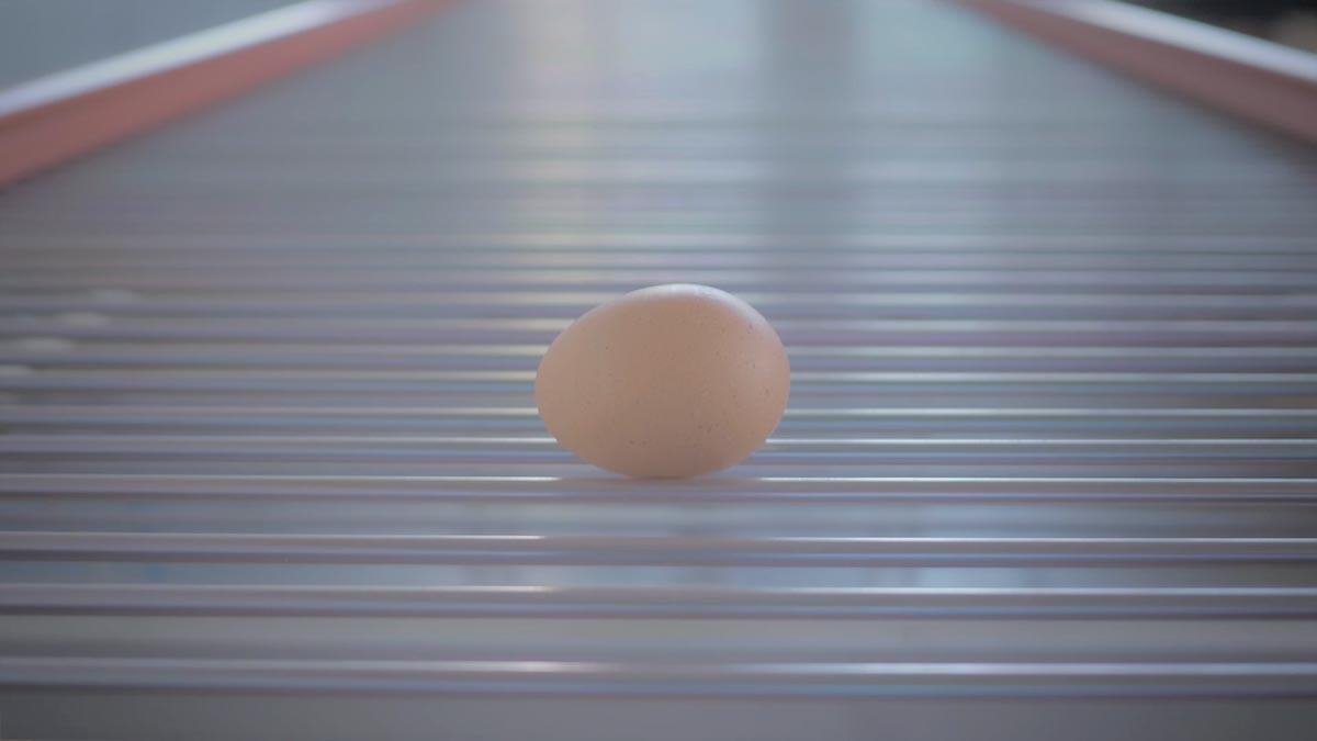 flexy egg conveyor