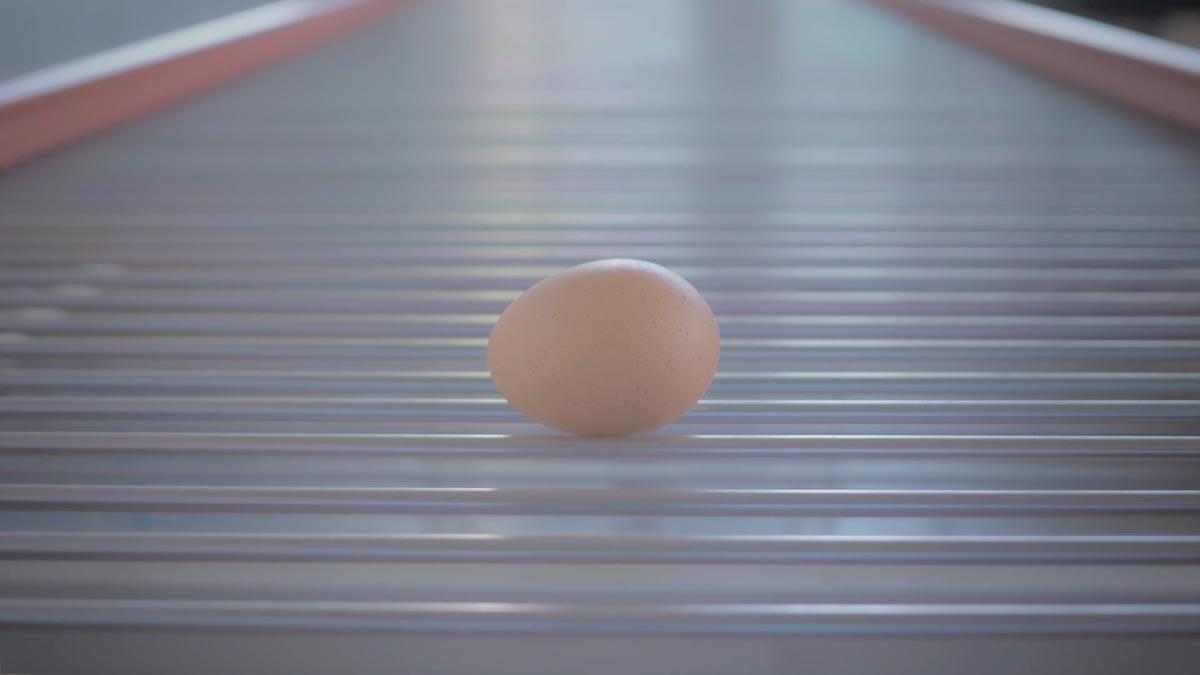 flexy egg conveyor